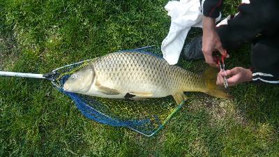 Carpe prese in lago carpa laghetto pescanetwork forum - Carpa a specchio ...